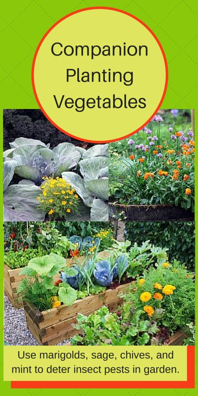 205 Best Images About Vegetable Gardening Ideas Organic 400 x 300