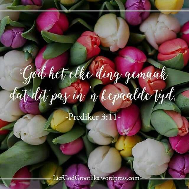 Prediker 3:11 God het elke ding gemaak dat dit pas in 'n bepaalde tyd, maar Hy het ook aan die mens 'n besef gegee van die onbepaalde tyd. Tog kan die mens die werk van God van begin tot einde nie begryp nie.  Vir diegene van ons in die wag ... hou aan om God se tydsberekening te vertrou en word aangemoedig met hierdie belofte…. #LiefGodGrootliks