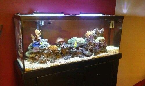 Saltwater fish tank 90 gallon my 90 gallon reef tank for 90 gallon fish tank for sale