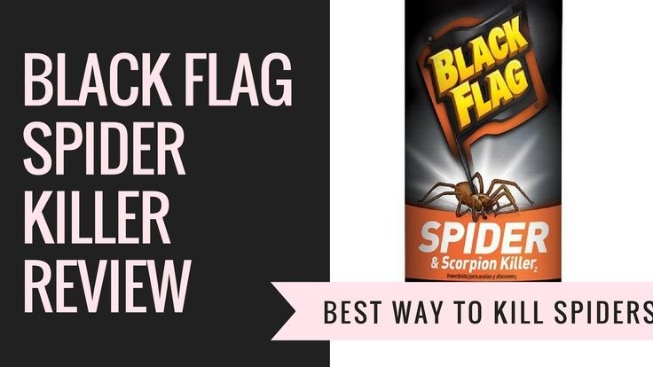 Black Flag Spider Killer Spray Review - Best Way To Kill Spiders