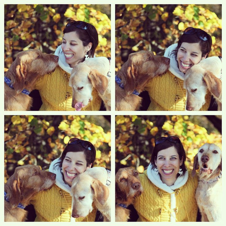 Photo by me. Photo: Diána Rigó - Budapest, in the fall of 2013 #Budapest #Hungary #Normafa #photography #fall #autumn #Autumn_leaf_color #yellow #style #dogs #love #happiness #smile #beauty #vizslak #vizsla