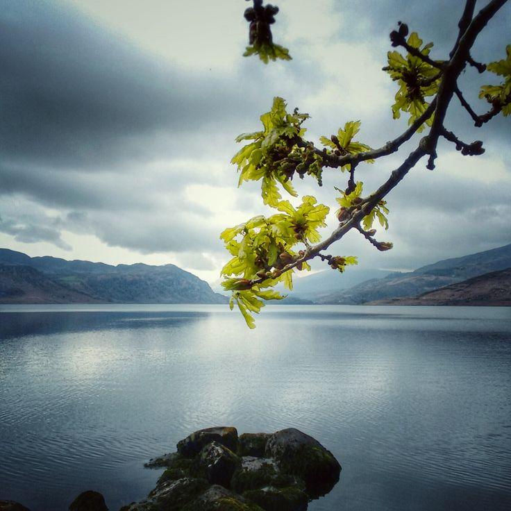 Oak tree bursting with life