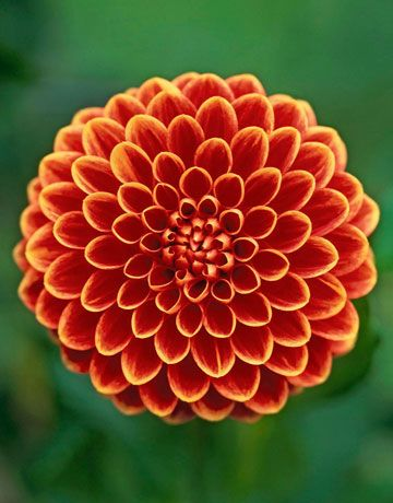 My advice to the women of America is to raise more hell and fewer dahlias.~ William Allen White