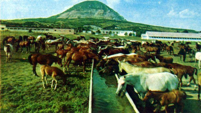 Арабские лошади на Ставрополье [1984 Пономарева Т. - Арабские лошади на Ставрополье]
