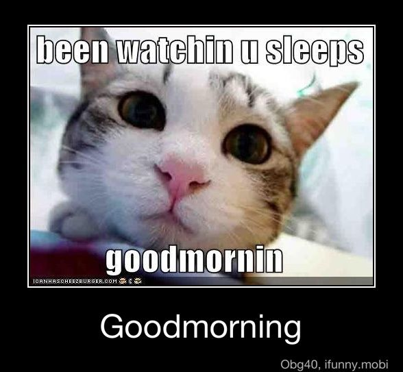 .: Funny Image, Kitty Cat, Good Mornings, Dogs, Funny Cat, Pet, Kittens, Animal, Cat Memes