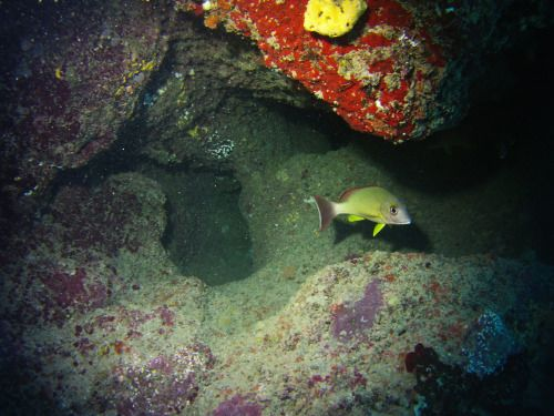 Samoa Diving Holiday - A fish lingering in a small cave