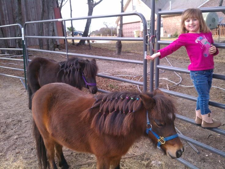 Mini horse mane styles