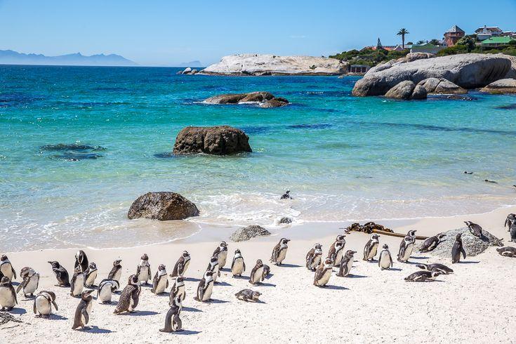 Kuukauden matkakohde - Etelä-Afrikka - Adalmina's Adventures