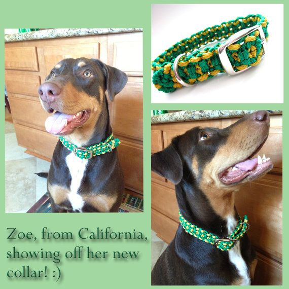 For 10% off entire shop - use Coupon Code PIN10 - Look how cute Zoe looks in her new collar! Green and Gold Large Dog Macramé Collar by Balilu,