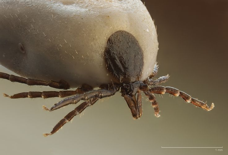 Tick-L. Email list for tick borne diseases in dogs. Originally for sighthounds, the list now encompasses all breeds.