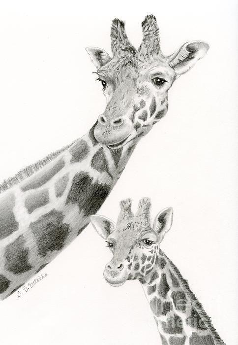 Title  Giraffes- Black And White  Artist  Sarah Batalka  Medium  Drawing - Graphite Pencil On Bristol Board