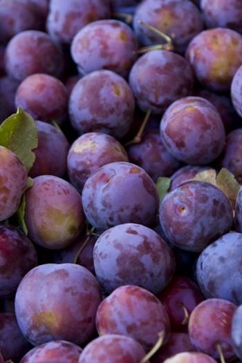 Purple Plums by Kirsten Wheeler Photography