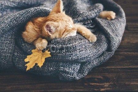 かわいい子猫生姜は木の床に柔らかい毛布で寝ています。
