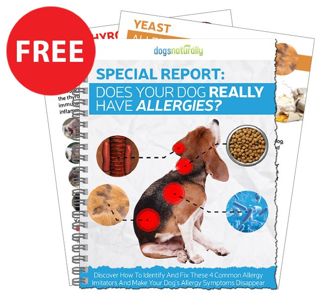 There are many natural remedies for your dog's itchy skin. Deva Khalsa VMD, shares 6 Safe and Natural Remedies for your dog's allergy symptoms.
