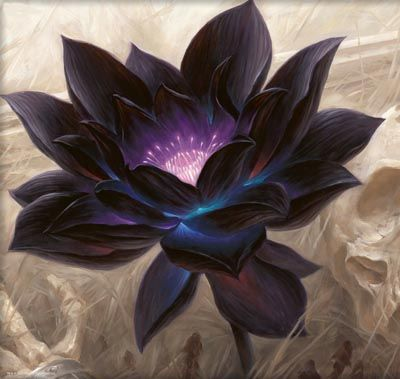 """Black Lotus Casino is named after this poisonous flower. It is from """"Black Lotus, a drug/narcotic flower in the fantasy world of Conan the Barbarian created by Robert E. Howard"""" See: http://en.wikipedia.org/wiki/Black_lotus 