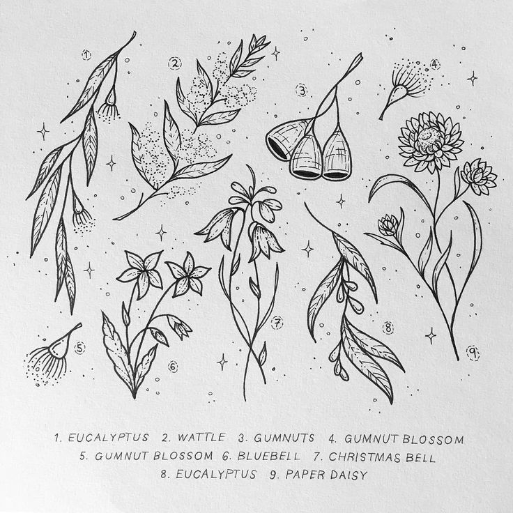 Image result for australian wattle tattoo
