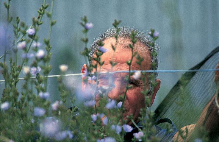 I #fiori del Radicchio di Treviso IGP