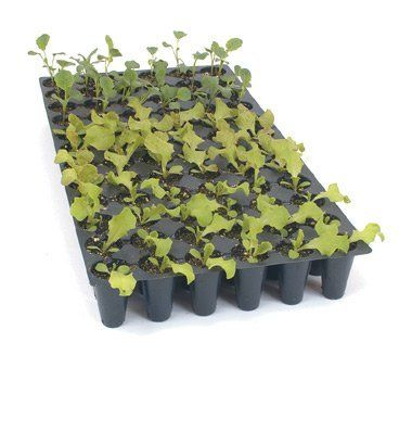 Tray Flat 72 Cells per Flat 5 Flats per Order (vob) by David's Garden Seeds. $21.95. Helps maintian heat for germination. Helps seedlings grow stronger and healthier. Satisfaction is guaranteed. Gets your seeds off to a great start. For home and market gardeners. Round cells. Use with Seedling trays for extra support or with Leak-Proof Trays for bottom-watering. Holes spaced for canopy development. 72 -cell flats are recommended for beets, endive, kohlrabi, lett...