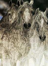 The Vanishing - Judy Larson - World-Wide-Art.com - $2450.00 #JudyLarson #Horses