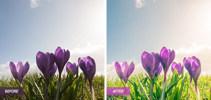 Lightroom Presets - Polarpx