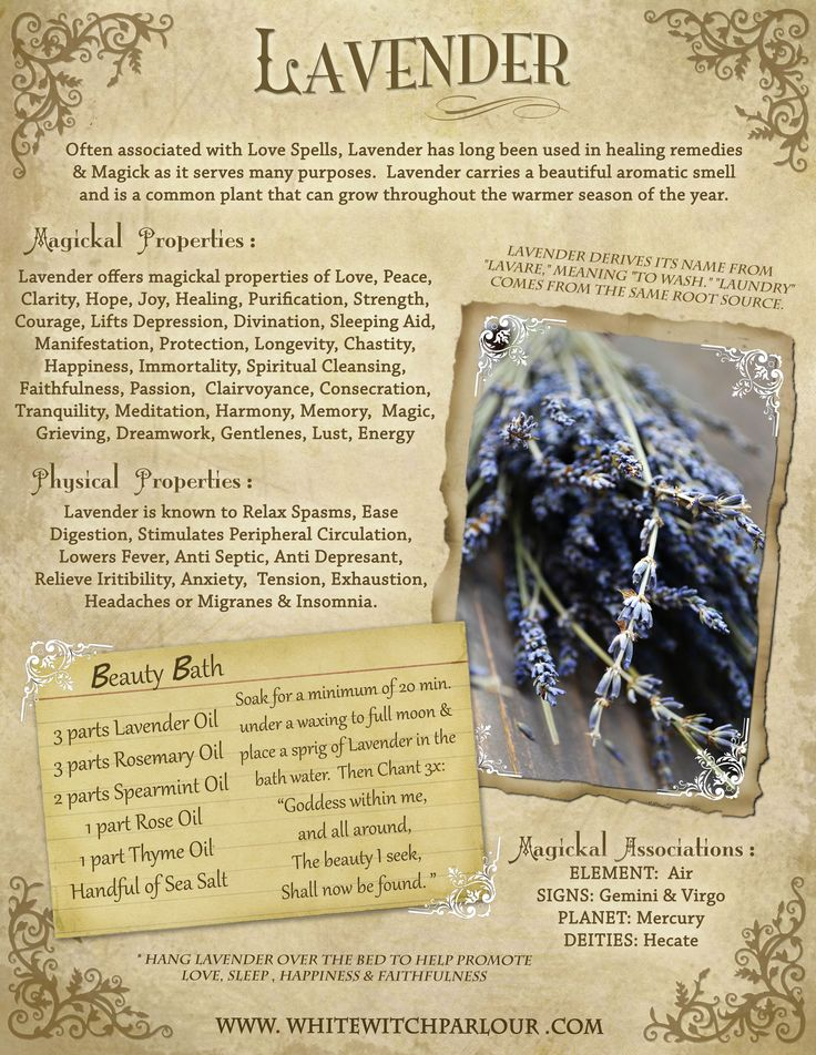 Lavender, plant dedicated to Hekate