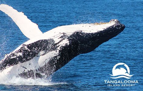 Tangalooma Whale Watching Cruise - Brisbane's Best