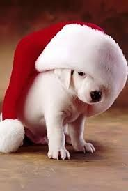 Amici a 4 zampe:  di alexis bardi  un augurio di buon Natale a tutt...