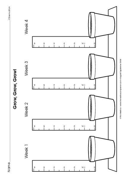 Plant growth chart   kindergarten- plants   Plant growth ...  Science Project Plant Growth Charts