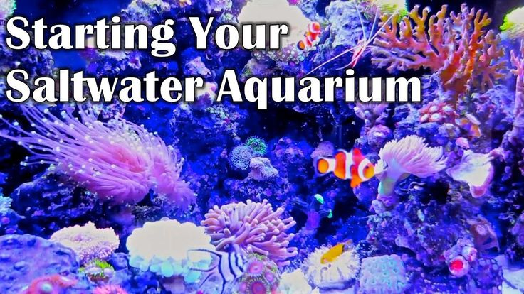 16 best images about saltwater tank setup on pinterest for Starting a saltwater fish tank