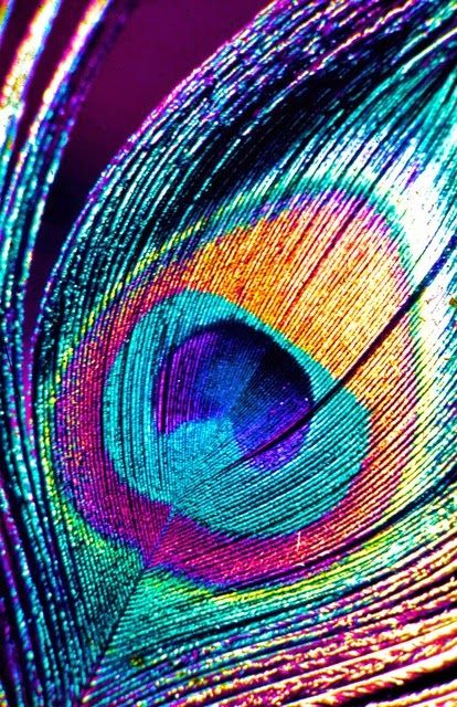 Nature Photography: Peacock Feathers http://guide2successinlife.com/ @isabellamanetti ❤️ Love these colours
