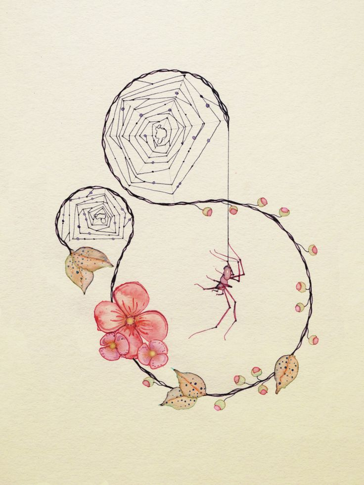 Spider and web illustration by Colleen Parker