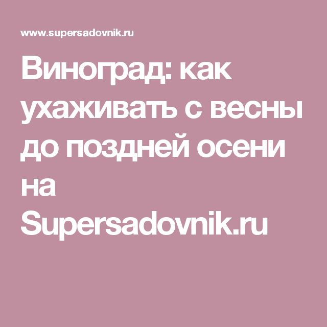 Виноград: как ухаживать с весны до поздней осени на Supersadovnik.ru