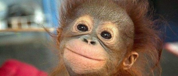 apekatt-kjæledyr-morsomme-dyrebilder-eavisa