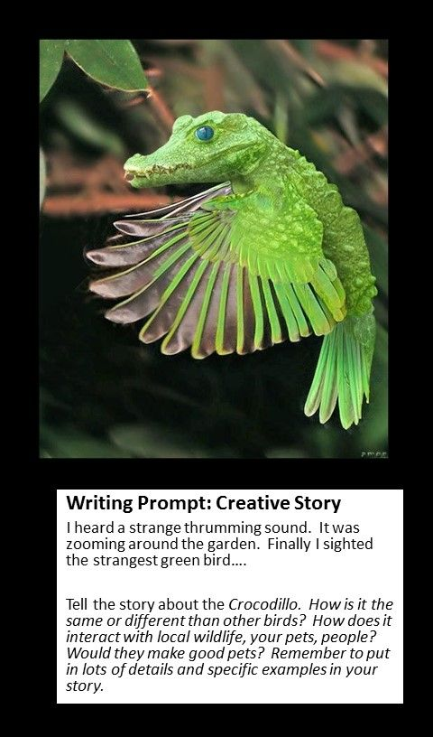 25  best ideas about recount writing on pinterest