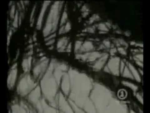 Bloodletting (The Vampire Song) - Concrete Blonde *Extended Music Video + Interview*