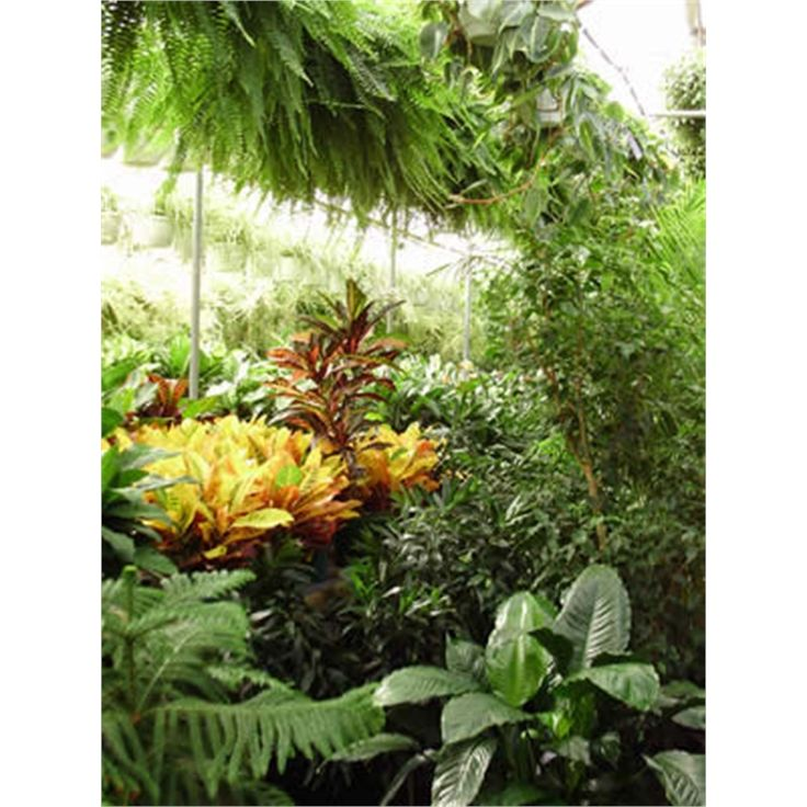 Find 200mm Assorted Indoor Plants at Bunnings Warehouse. Visit your local store for the widest range of garden products.
