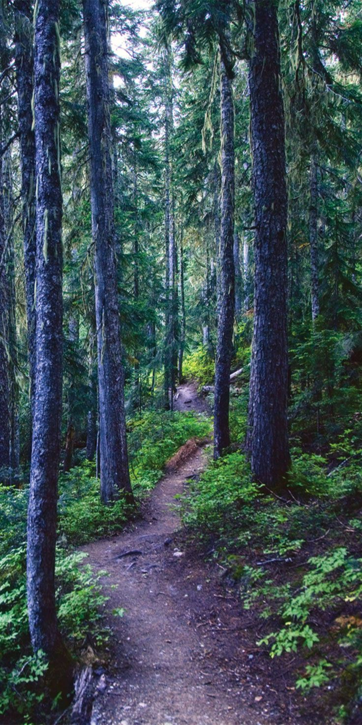 Getting lost on forest trails in Canada - by Morgan Lee Alain