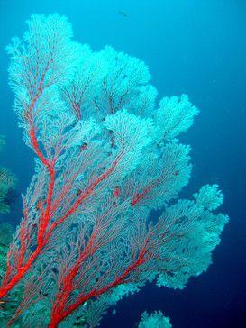 Foto: Wasserwelten - Korallen und Riff