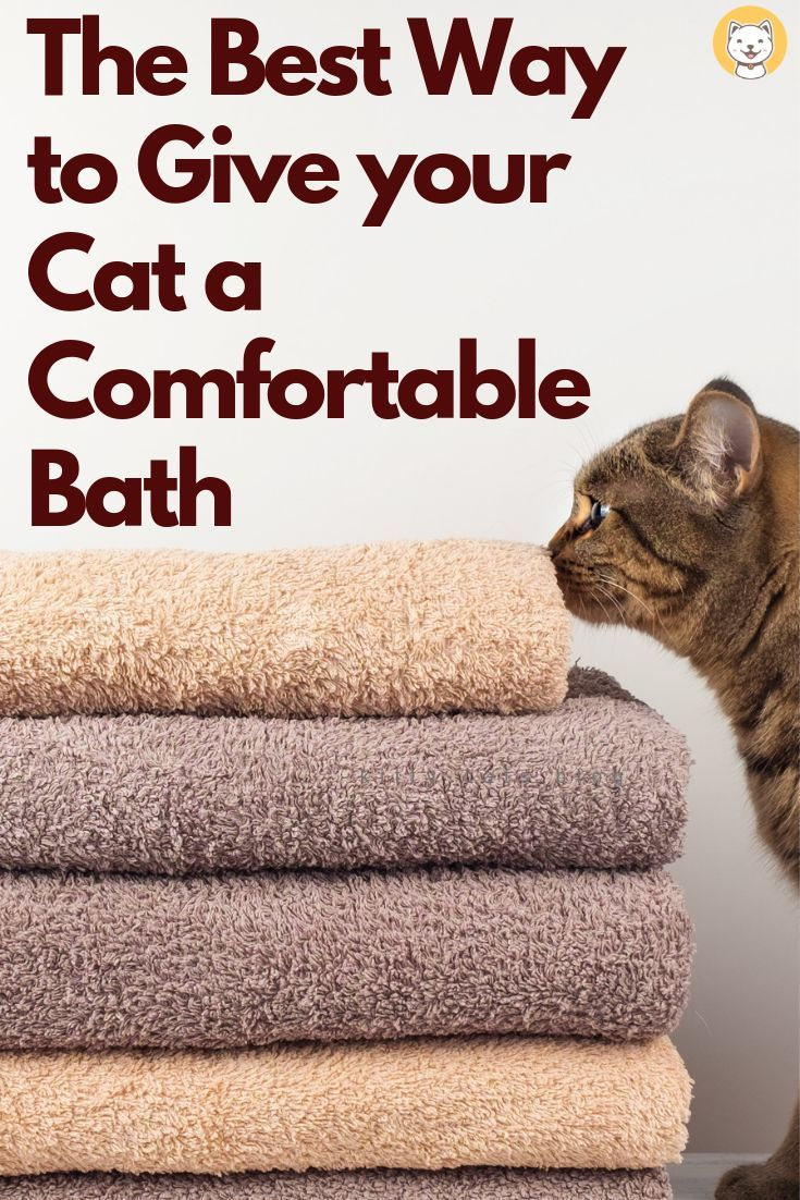 The Best Way To Give Your Cat A Comfortable Bath Cat Care Tips What Cats Can Eat Cat Problems