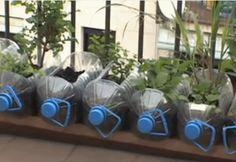 Macetas hechas con garrafas de plástico recicladas. #reciclaje #huertosurbanos