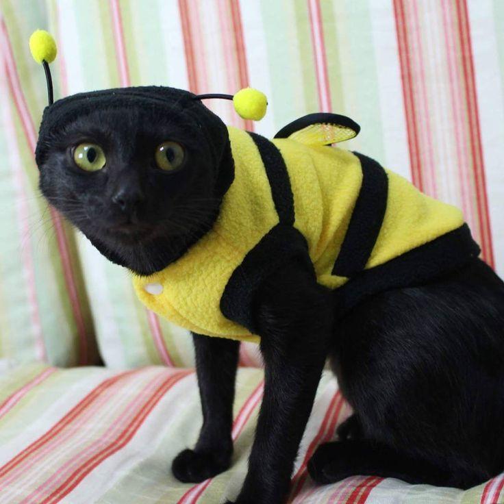 """@mandala_athena no Instagram: """"Diga """"boa noite abelhinha"""" e sua noite será tranquilinha 🐝 . . . . #costume #fantasia #abelha #bee…"""""""