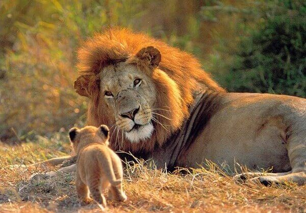 Resultado de imagen para animales que nacen pequeños y crecen grandes