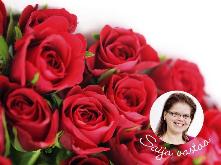 Asiantuntija vastaa: Miten leikkaan ruusut? | Kodin Kuvalehti