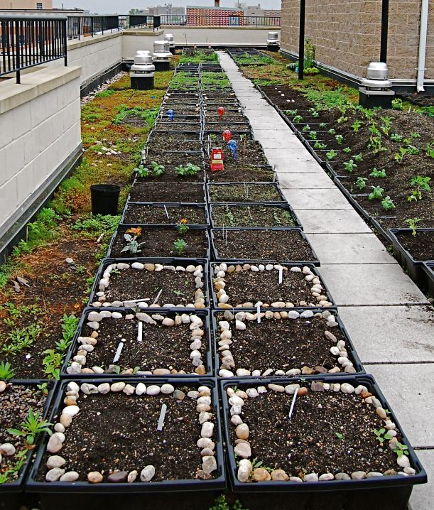 1000+ Images About Green Roofs On Pinterest