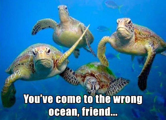 Image result for sea turtle funny