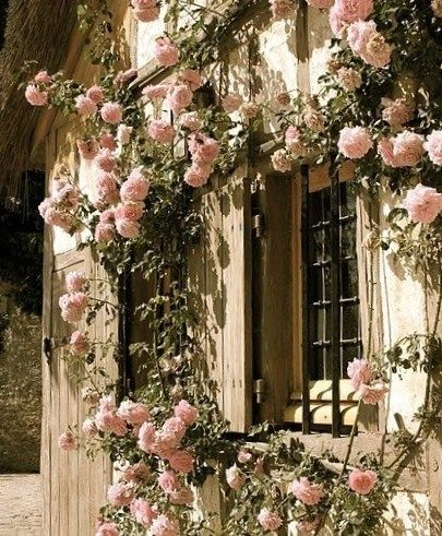 Roses in an English Countryside