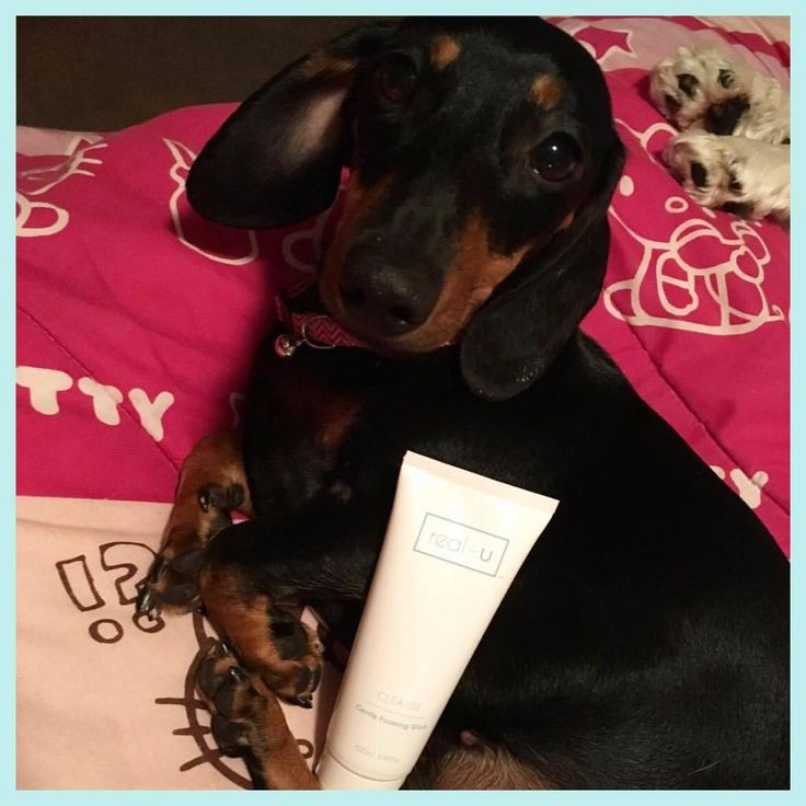 """""""When you're in love with @realuaustralia but so is someone else, I'm a big fan of real-u, if you have problem skin look no further 😍🐶❤️"""" - @herbie_love_bug has found the cutest member of our #realucommunity 😉 give your skin some love after a ruff day Beauties 💕"""