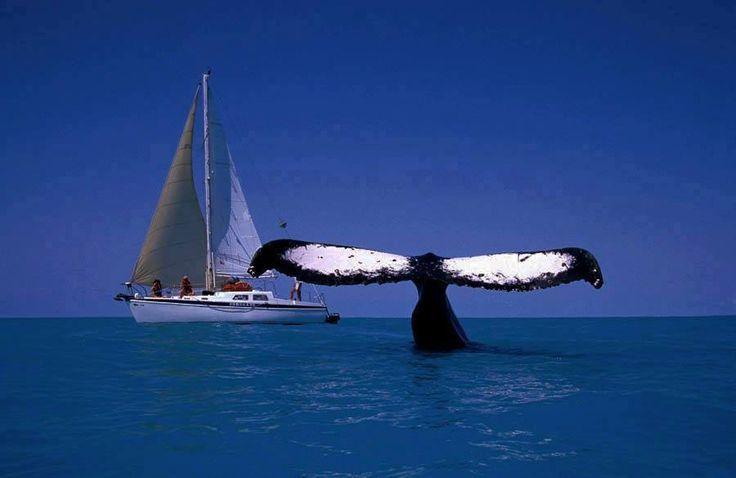 THINK BLUE !!! INFORMATION by Sea Shepherd Global #SeaShepherd #StandUp250 #OpGrindini #Denmark #FaroeIslands Here is Edel Schumann & Sozial Umdenken With Friends Thanks : Ricardo Steiner Teixeira &  https://www.facebook.com/gentiana.resnjaku/posts/1023790824310617