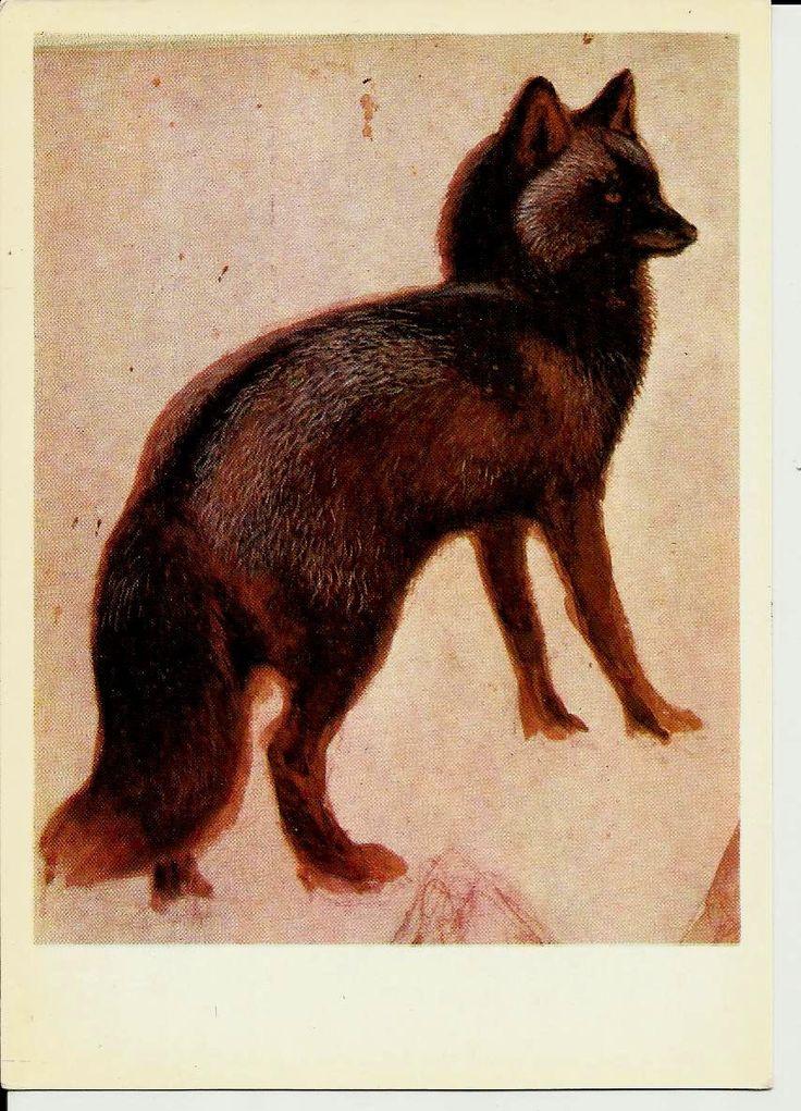 Silver - Black Fox - Drawing Animal - Vintage Russian Postcard art work  V. Vatagin unused by LucyMarket on Etsy