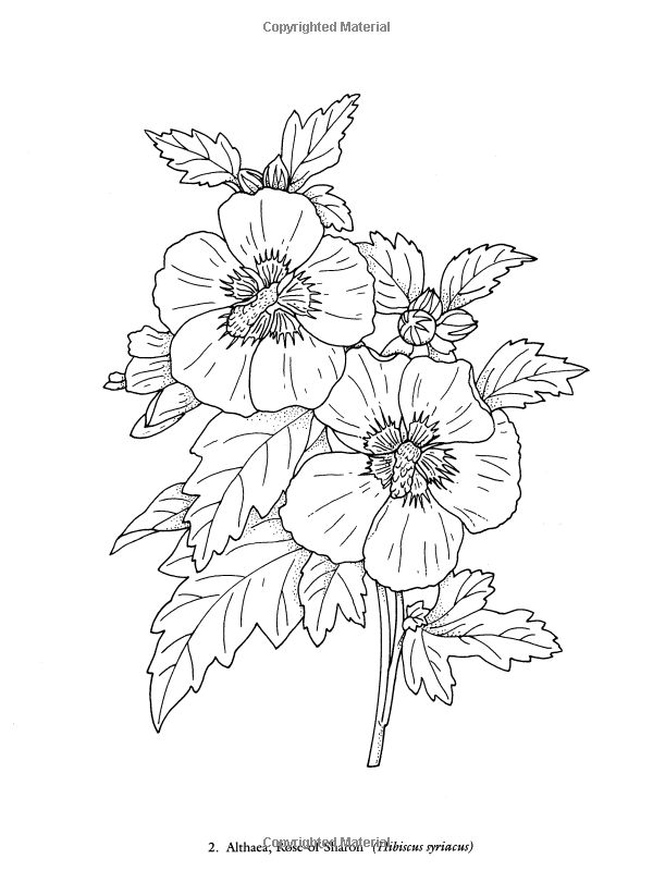 Redoute Flowers Coloring Book Charlene Tarbox 9780486400556 Books